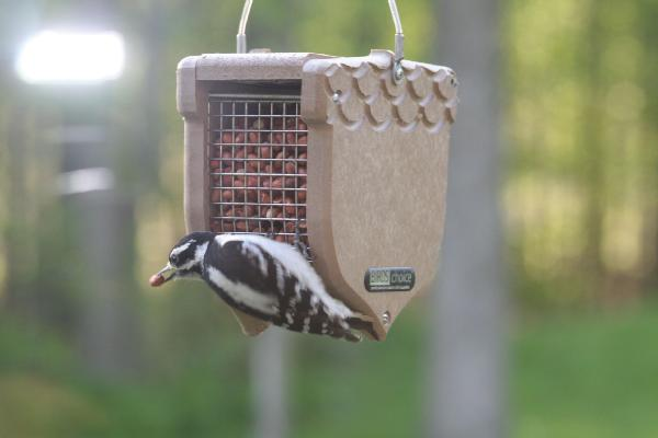 Bird's Choice Recycled Peanut Feeder w/Hanging Cable