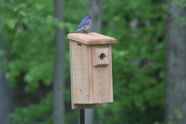 Bird's Choice Standard Bluebird House