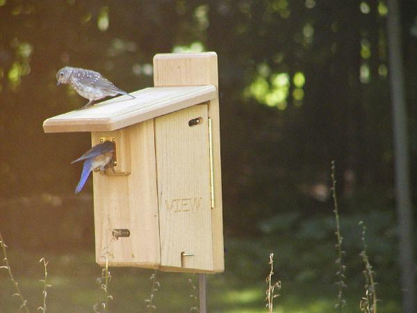 Bird's Choice Ultimate Bluebird House w/Viewing Window