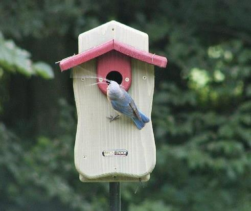 Bird's Choice Bluebird House w/Viewing Window