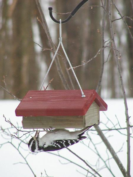 Bird's Choice Cedar Single Cake Upside Down Suet Feeder w/Hanging Cable