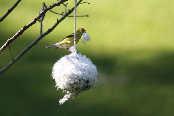 Bird's Choice Cottontail Nest Building Ball