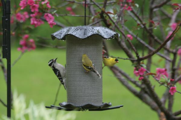 Bird's Choice 3 Quart Forever Nyjer Feeder