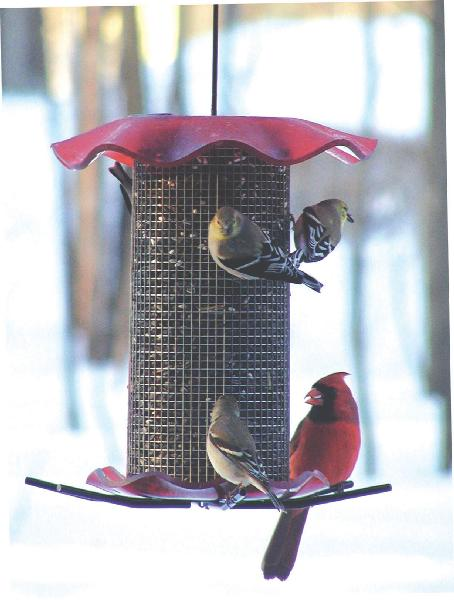 Bird's Choice 3 Quart Forever Sunflower Feeder