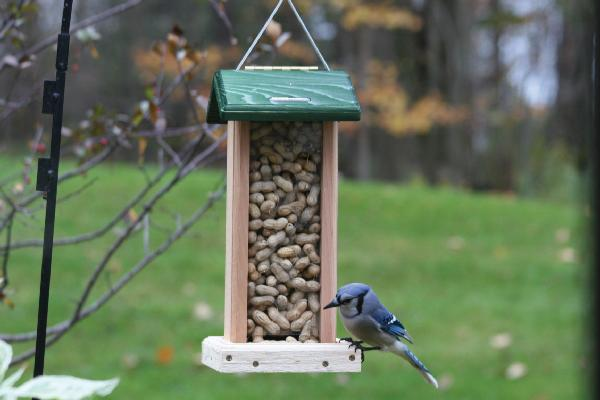 Bird's Choice Bluejay Feeder w/Hanging Cable