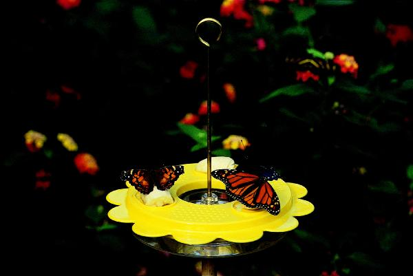 Bird's Choice Flutterby Butterfly Feeder-12 oz