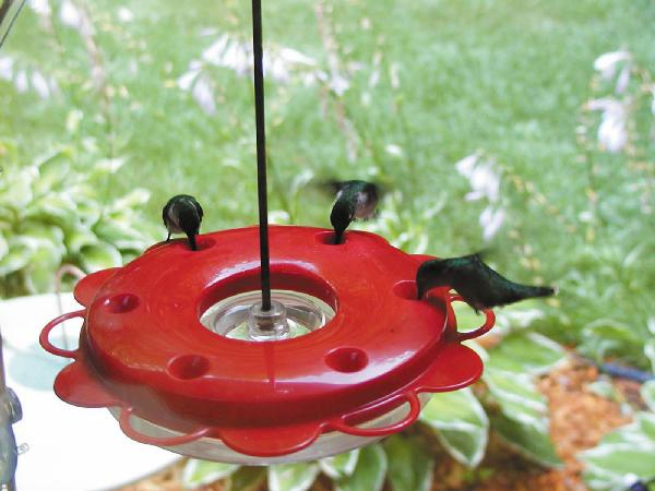 Bird's Choice Hummerfest Hummingbird Feeder-12 oz.