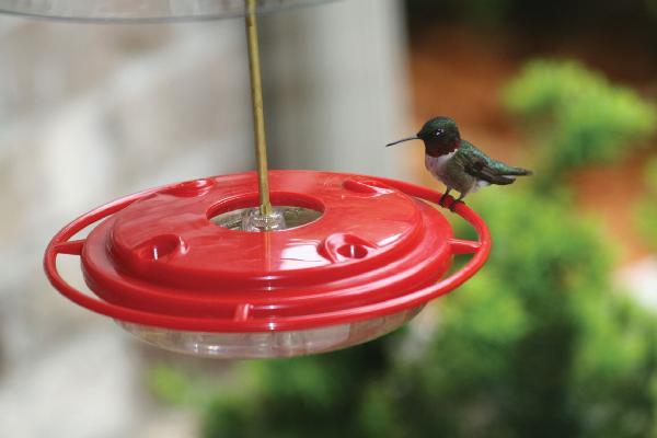 Bird's Choice Hummerfest Hummingbird Feeder-8 oz.