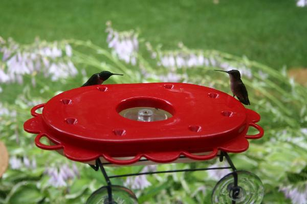 Bird's Choice 11 Window-Mount Hummingbird Feeder-16 oz.