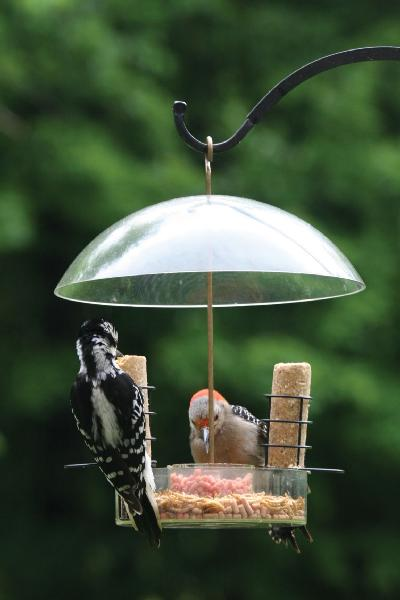 Bird's Choice Supper Dome w/Removable Suet Holders