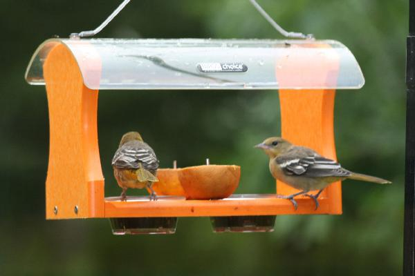 Bird's Choice Recycled Oriole Feeder w/Hanging Cable