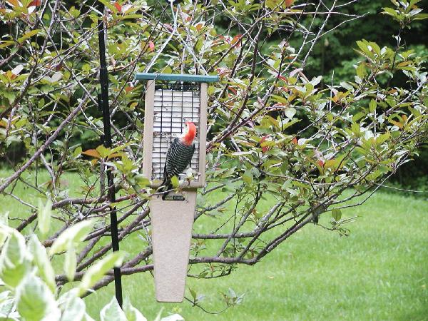Bird's Choice Recycled Doubled Cake Pileated Suet w/Hanging Cable