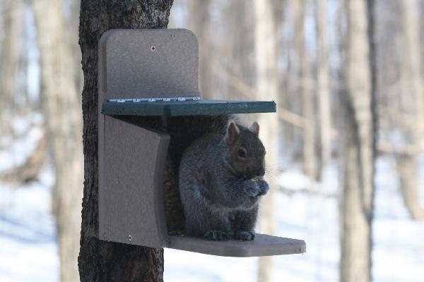 Bird's Choice Recycled Squirrel Feeder Munch Box