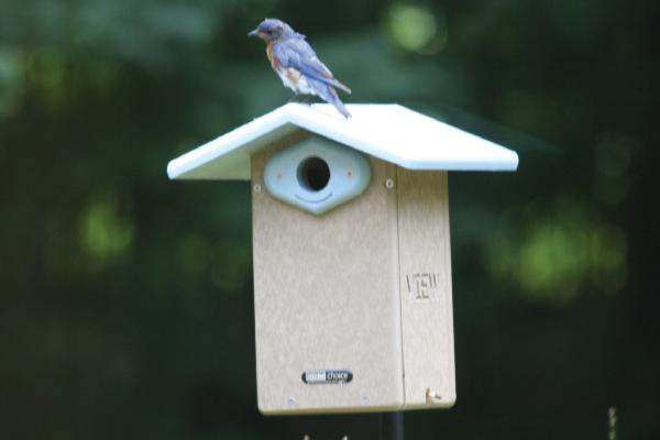 Bird's Choice Recycled Ultimate Bluebird House w/Viewing Window