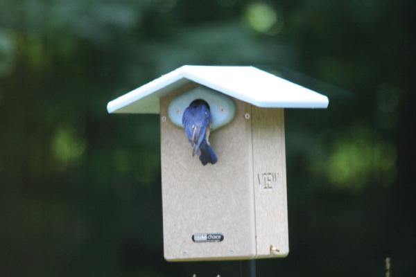 Bird's Choice Recycled Ultimate Bluebird House w/Camera