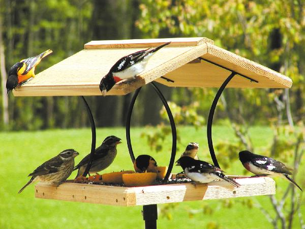 Bird's Choice Wrought Iron & Cedar Fly-Thru Feeder