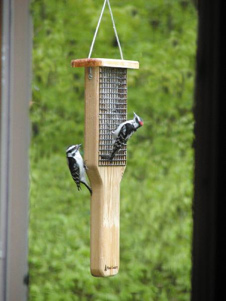 Bird's Choice Double Cake Pileated Suet Feeder w/Hanging Cable
