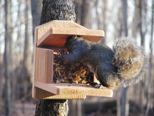 Bird's Choice Squirrel Feeder Munch Box