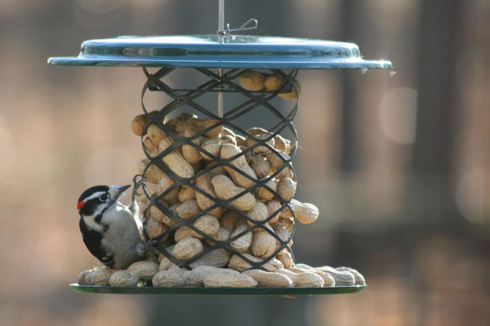 Bird's Choice Magnet Mesh Whole Peanut in the Shell Feeder