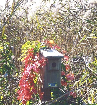Cape Cod Bluebird House - Joan Henderson, Stafford, PA