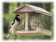 [Rose Breasted Grosbeak]
