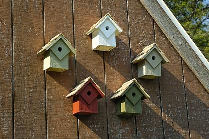 Heartwood Summer Home - Prepack of five Birdhouse