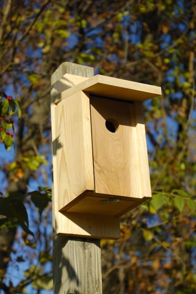 Heartwood Eastern Bluebird Joy Box Birdhouse