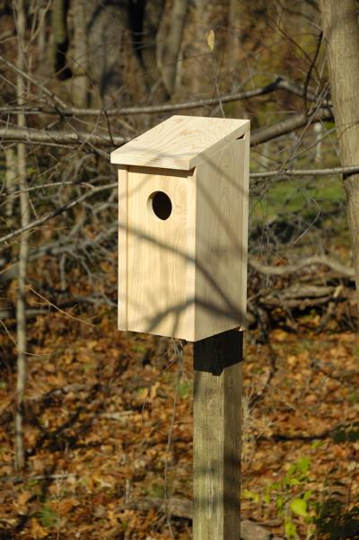 Heartwood Flicker Joy Box Birdhouse