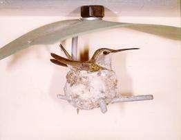 HummingbirdHummingbird House