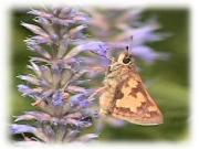 [Moths]