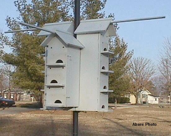 Facts about Purple Martins